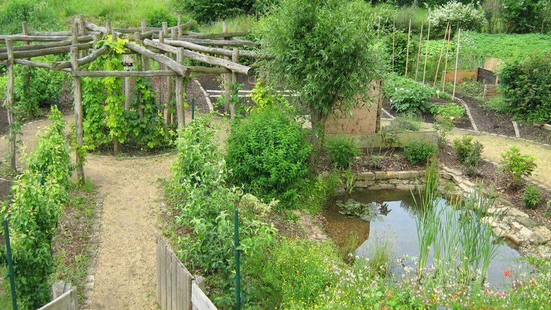 CIGL-Hesperange-kalendula-jardin